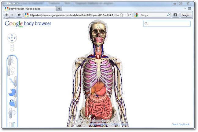 Search results for muscles du corps humain total for Interieur du corps humain image
