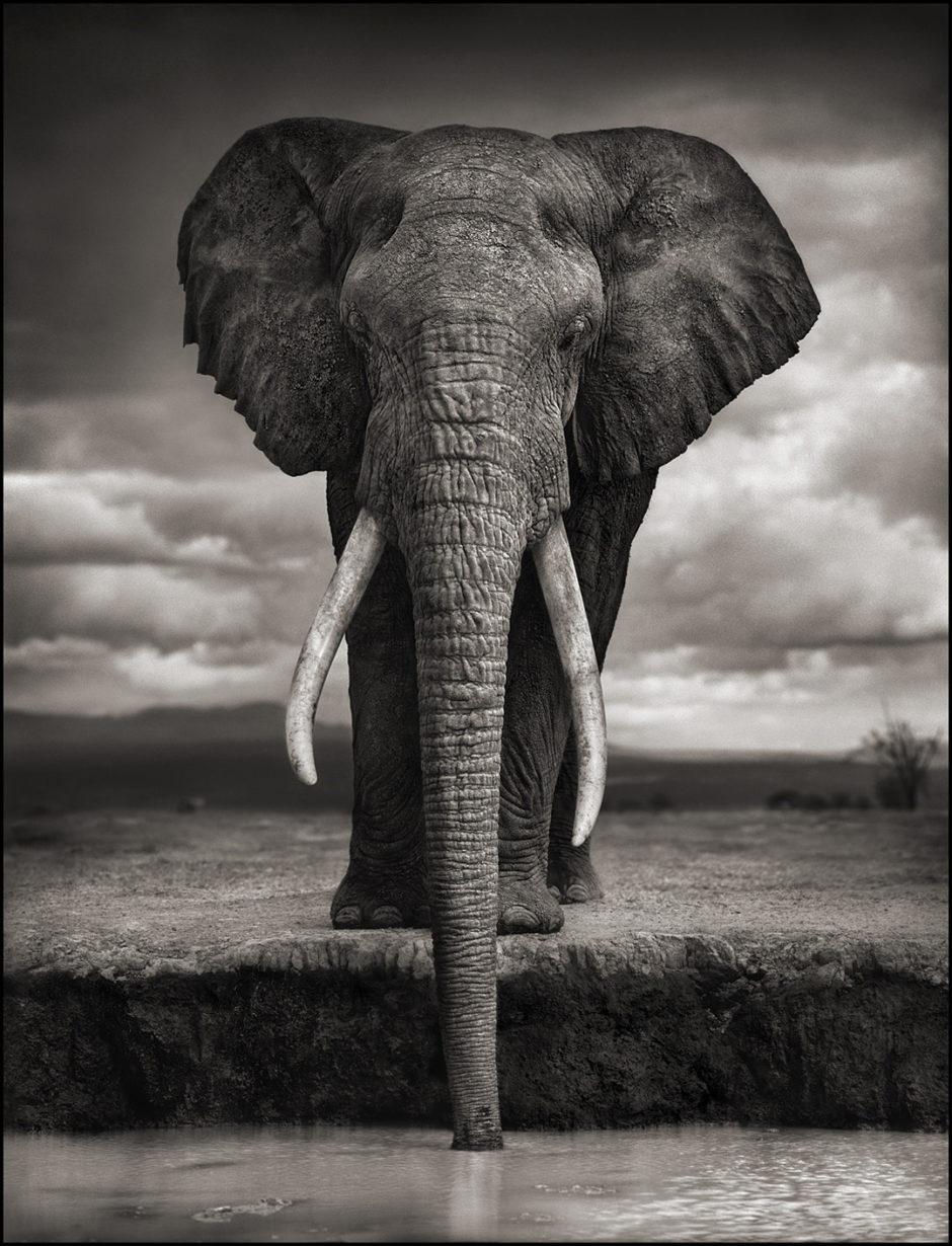 Nick Brandt, un photographe qui a révolutionné la photographie animalière